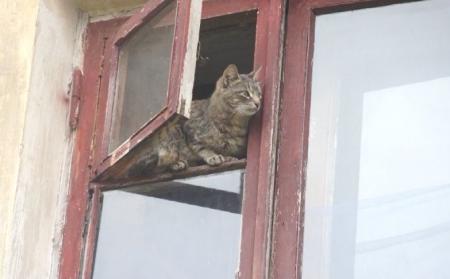 Из-за любви к кошкам пенсионерка может оказаться на улице